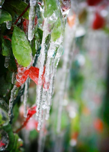 Icicles_lr
