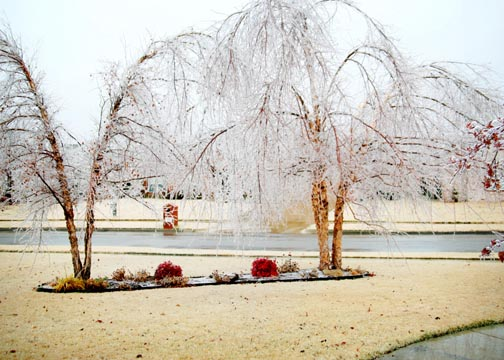 Icy_trees_day1_lr